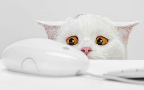 Gatito Blanco y Ratón