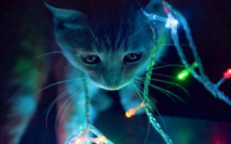 Gatito con luces de Navidad.