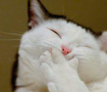 Gatito Divertido