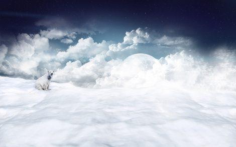 Oso Polar en las nubes.