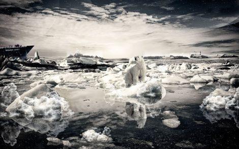 Oso Polar Wallpaper