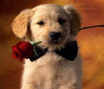 Perrito preparado para San Valentín.