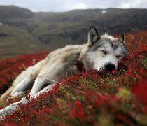Perro en campo de Flores.