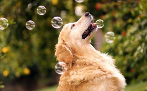 Perro Jugando con Pompas de Jabón