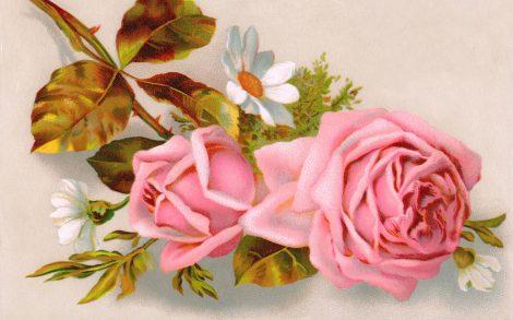 Rosa para el Día de la Madre.