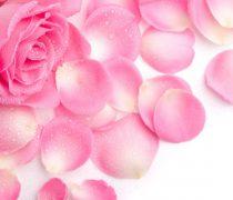 Rosa para Móvil
