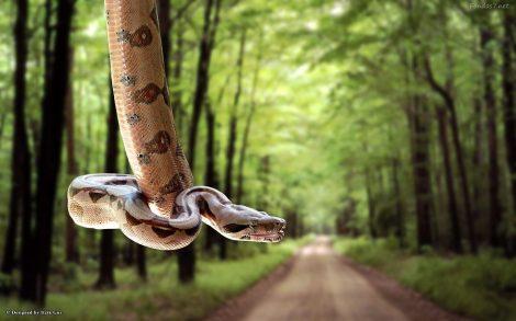 Serpiente en tu Escritorio.