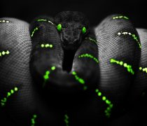 Serpiente Negra Wallpaper