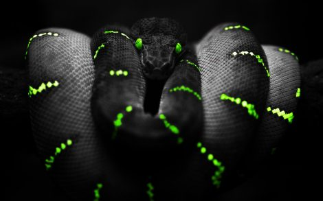 Serpiente Negra Wallpaper