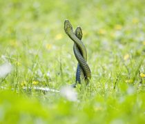 Serpientes Enamoradas.