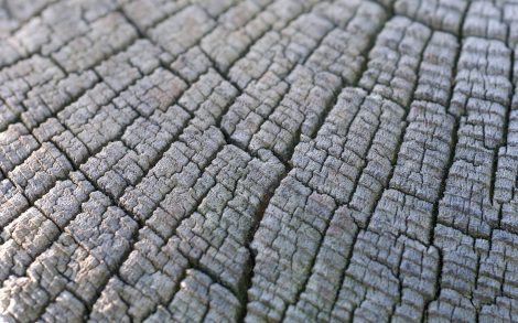 Textura Madera Tronco Árbol
