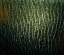 Textura piel de Serpiente