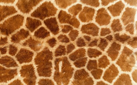 Textura piel de Jirafa