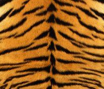 Textura Piel de Tigre