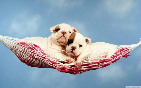 Wallpaper Cachorros en una Hamaca