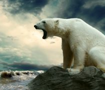 Wallpaper Oso Polar rugiendo