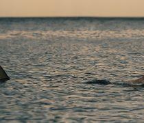 Perrito escapando de un Tiburón