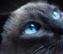 Wallpaper Ojos de Gato