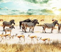 Wallpapers Animales Salvajes.